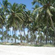 dsc08950 180x180 - Una visita a la Playa más linda de Brasil