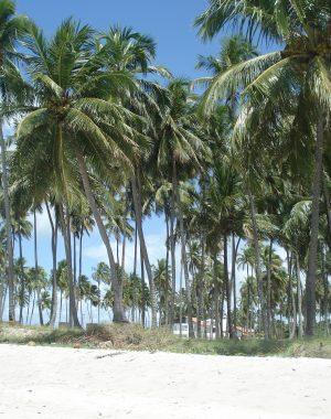 dsc08950 300x380 - Una visita a la Playa más linda de Brasil