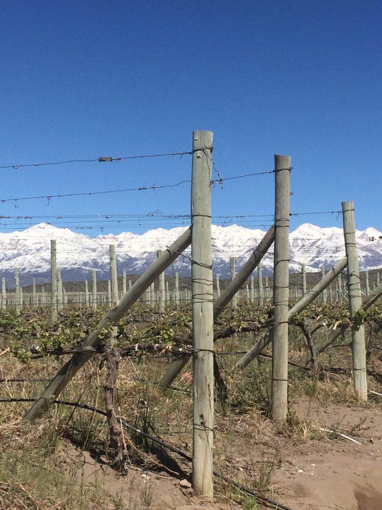 img 8343 768x1024 - Hotel Auberge du Vin en Mendoza