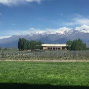 img 8809 180x180 - Paseando por la Bodega Salentein en Mendoza