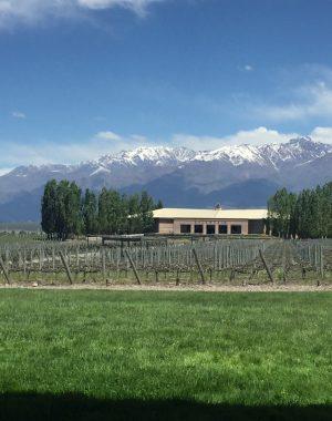img 8809 300x380 - Paseando por la Bodega Salentein en Mendoza