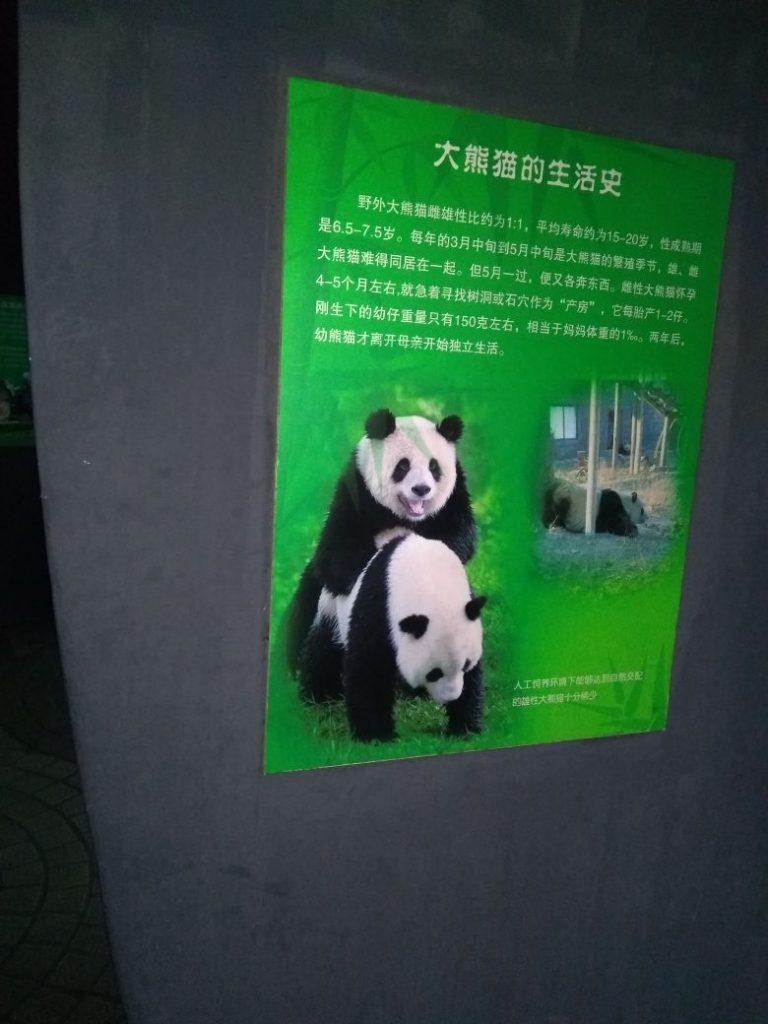 1f4fdbc5 4bf2 46e2 ad7f c628232bb302 768x1024 - Curiosidades de Beijing en imágenes