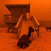 1541888830604 180x180 - Incendios en California, ¿Qué hacer antes de viajar?