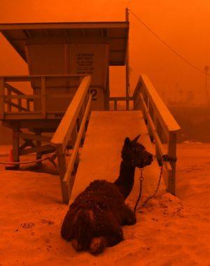 1541888830604 300x380 - Incendios en California, ¿Qué hacer antes de viajar?